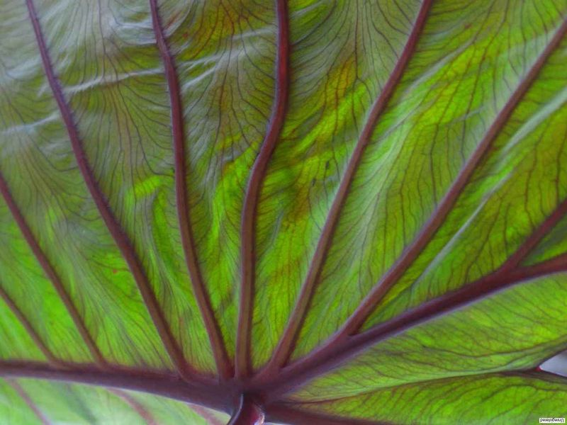 Divine Plante Annecy 0808 104 Gérard Berne
