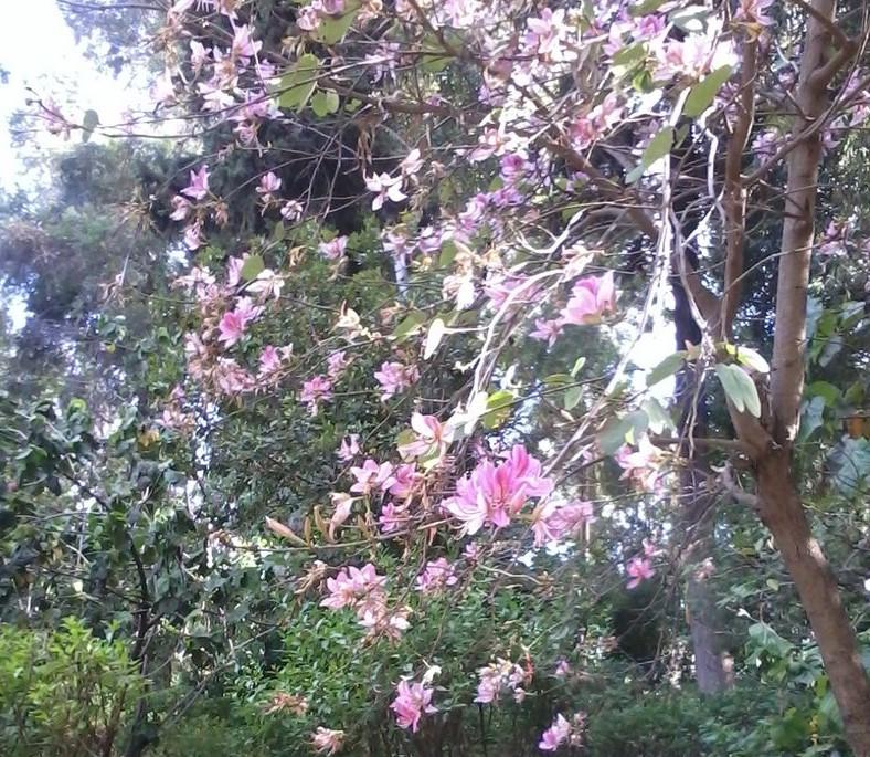 Jardin Jnane Sbil 2