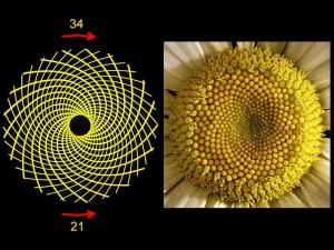Phi le nombre d'or, fibonaci, spirale