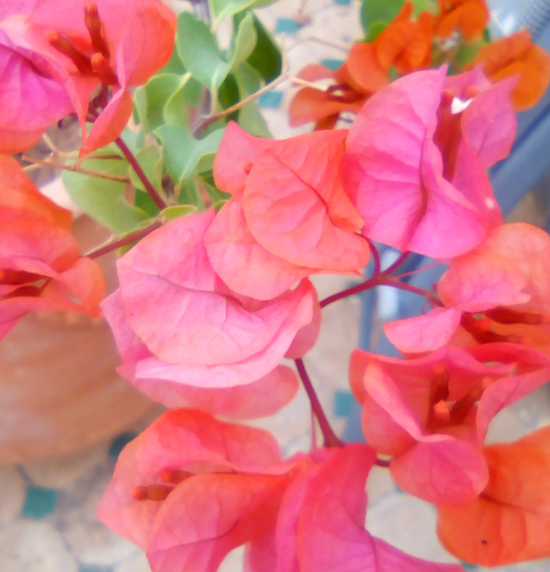 Fleurs sur la terrasse 2